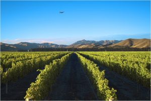 Plane over Marlborough vineyard